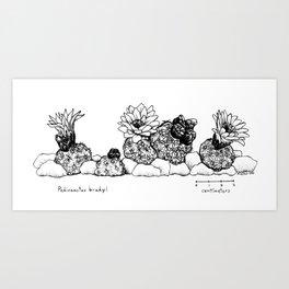 Pediocactus bradyi, lineup Art Print