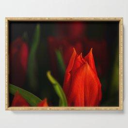 Rubeum tulips amoris Serving Tray