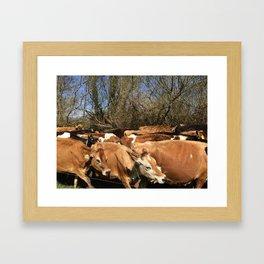 Caramel Cows Framed Art Print