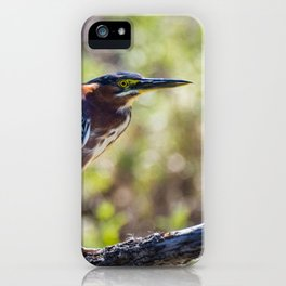 Colorful Green Heron Perched iPhone Case