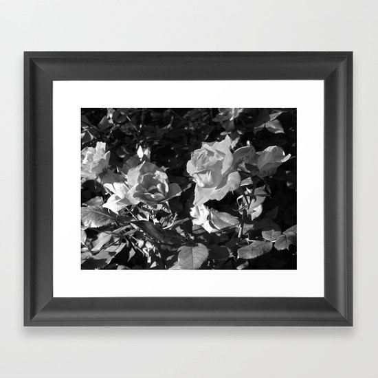 Rose Framed Art Print