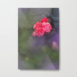 Dreamy Begonias Metal Print