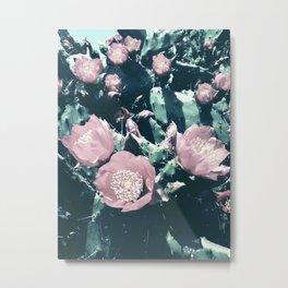 Cacti in Bloom n.2 Metal Print