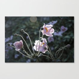Bokeh Outline Bloom Canvas Print