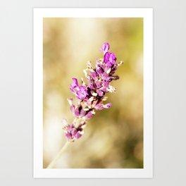 Warm Vintage Lavender Art Print