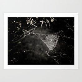 SPIDERWEB IN TREE Art Print