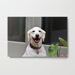 Happy Dog Metal Print