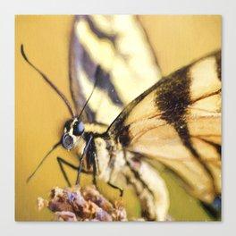 Summer Butterfly Canvas Print