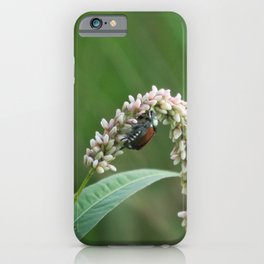 bug 01 - beetle on a summer wildflower iPhone Case