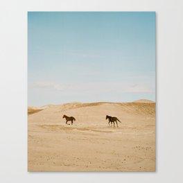 wild horses 3 Canvas Print