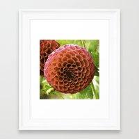 dahlia Framed Art Prints featuring Dahlia by Sparrow House Photography