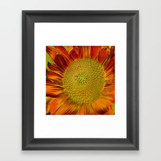 The flower of sun   (This Artwork is a collaboration with the talented artist Agostino Lo coco) Framed Art Print