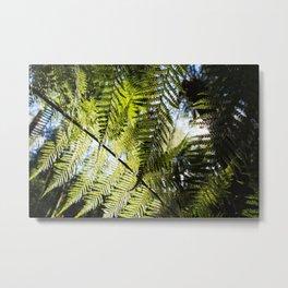 Underneath the Ferns Metal Print