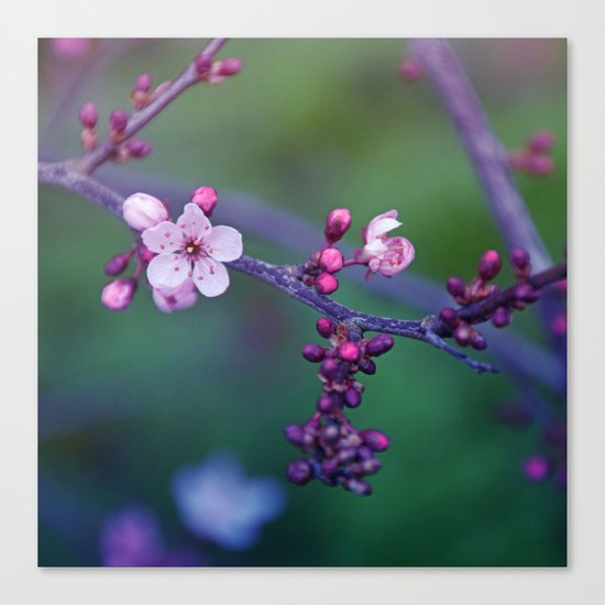Dreamy purple Cherry Blossom Canvas Print