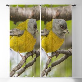 Bird Life In Patagonia. Blackout Curtain