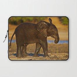 Young african elephant, wildlife Laptop Sleeve