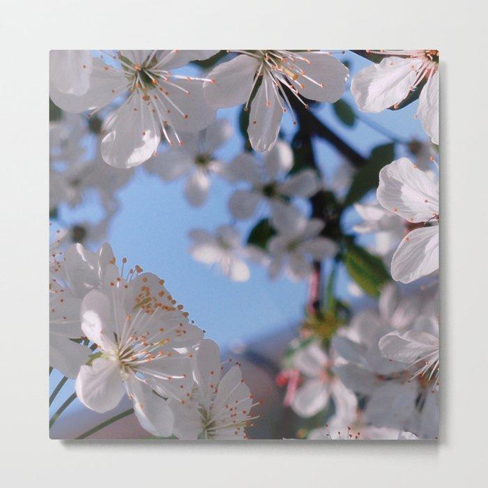 Blooming in White Metal Print