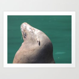 Californian Sea lion Art Print