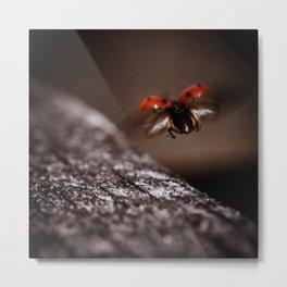 Ladybird in flight Metal Print