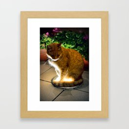 Red cat Framed Art Print