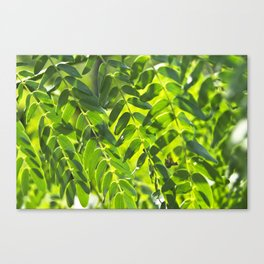 Sunny Leaves Canvas Print