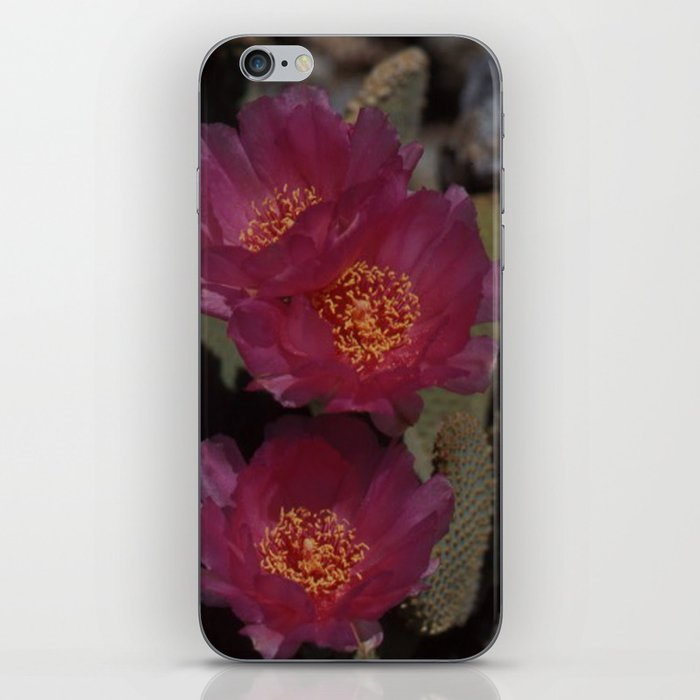 Pink Cactus Flower iPhone Skin