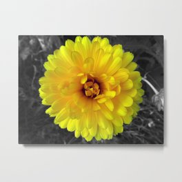 Sunshine #1 Metal Print