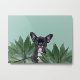 French Bulldog between agave leaves Metal Print