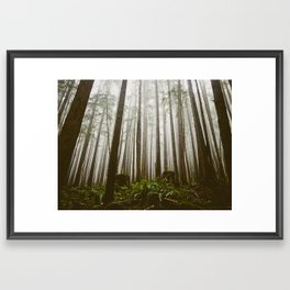 Rainforest of the Pacific Northwest Framed Art Print