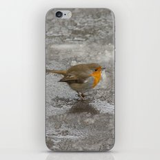 Robin on Ice iPhone & iPod Skin
