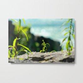 Green in nature Metal Print