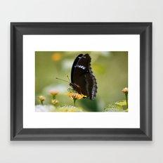 Butterfly (1) Framed Art Print