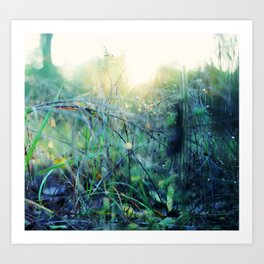grasses Art Print