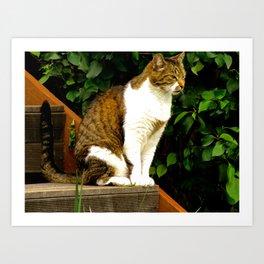 """Felis Catus"" by ICA PAVON Art Print"
