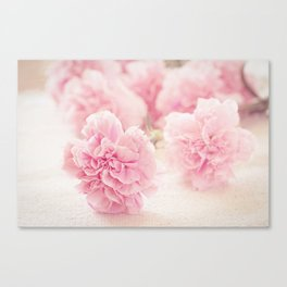 Pale Pink Carnations 2 Canvas Print