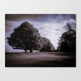 Memory of the wood Canvas Print