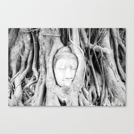 Buddha Tree Canvas Print