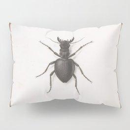 Pierre Joseph Redouté - A Stag Beetle Pillow Sham