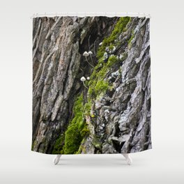 Tree trunk and mushrooms Shower Curtain