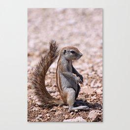 Just sit down - Squirrel, Africa wildlife Canvas Print