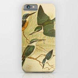 Vintage Print - The Birds of Australia (1891) - Kingfishers iPhone Case