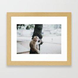 Monkey in Thailand Framed Art Print