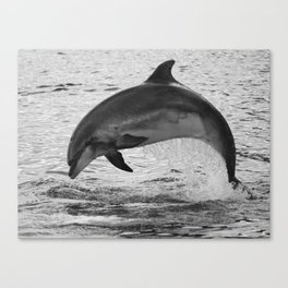 Jumping wild bottlenose dolphin black and white Canvas Print