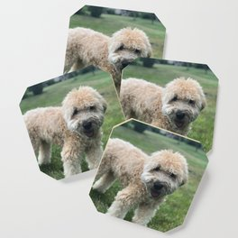 Smiling Soft Coated Wheaten Terrier Coaster