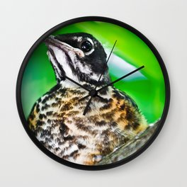 Young Robin Out on a Limb Wall Clock