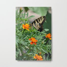 Marigolds and Butterfly Metal Print