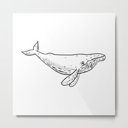 Humpback Whale Drawing Side Metal Print
