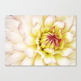 White Floral Delight . Canvas Print