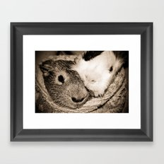 Guinea Pig Love Framed Art Print