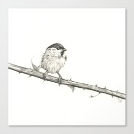 Milk-Warm Mewling of Chickadees Canvas Print